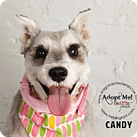 Adopt A Pet :: Candy - Omaha, NE