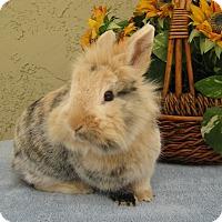 Adopt A Pet :: Sprinkles - Bonita, CA