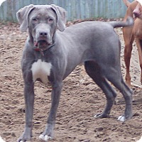 Adopt A Pet :: Mila - Grand Haven, MI