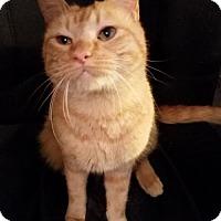 Adopt A Pet :: Grant - Hurst, TX
