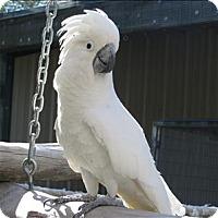 Adopt A Pet :: Bubba - Denver, CO