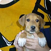 Adopt A Pet :: Maggie - Oviedo, FL