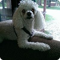 Adopt A Pet :: Annie - Buffalo, WY