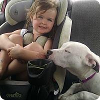 Adopt A Pet :: Bella - Villa Park, IL