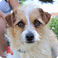 Adopt A Pet :: Alfie - Oakley, CA