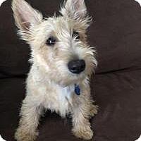 Adopt A Pet :: Martin Fergus (Marty)-Pending - Omaha, NE