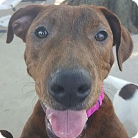 Adopt A Pet :: Stanley - Uxbridge, MA