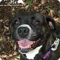 Adopt A Pet :: Abbey - Roanoke, VA