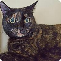 Adopt A Pet :: Princess Sophia - Salisbury, MA