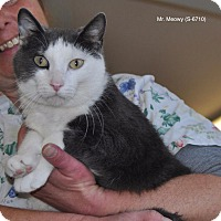 Domestic Shorthair Cat for adoption in Sunrise Beach, Missouri - Mr. Meowy