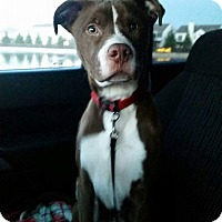 Adopt A Pet :: Finn - Indianapolis, IN