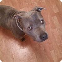 Adopt A Pet :: Ruby - Rosemount, MN
