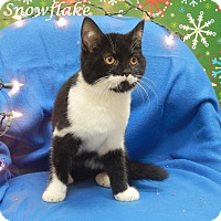 Adopt A Pet :: Snowflake - Bucyrus, OH
