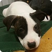 Adopt A Pet :: Betty - Pottsville, PA
