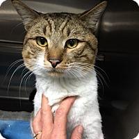 Adopt A Pet :: Huxley - North Las Vegas, NV