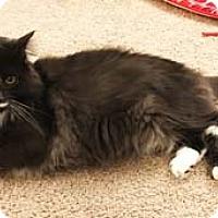 Adopt A Pet :: Mochi - Merrifield, VA