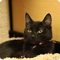 Adopt A Pet :: Punkin - Albany, NY