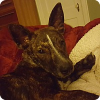 Adopt A Pet :: Rollins - Newport, KY