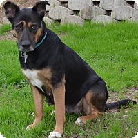 Adopt A Pet :: Delilah - Simi Valley, CA