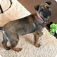 Adopt A Pet :: Rihanna - Chaska, MN