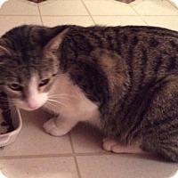 Adopt A Pet :: Ellie - Newtown, CT