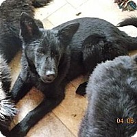 Adopt A Pet :: Rosabella - Rome, NY