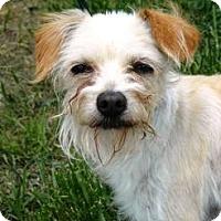 Adopt A Pet :: Pretzel - Cheyenne, WY