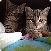 Adopt A Pet :: Peter & Toni - Island Park, NY