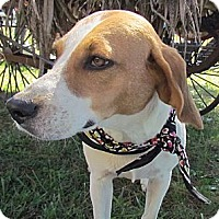 Adopt A Pet :: Allie - West Bridgewater, MA