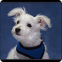 Adopt A Pet :: Jacob - Ft. Bragg, CA