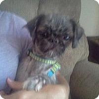 Adopt A Pet :: Libby short for Liberty - Lexington, TN