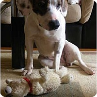 Adopt A Pet :: Sparky - Toronto/Etobicoke/GTA, ON