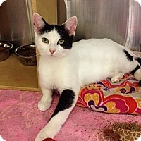 Adopt A Pet :: Janessa - Byron Center, MI