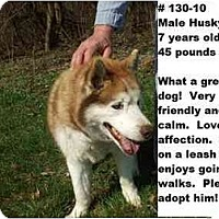 Adopt A Pet :: # 130-10 - ADOPTED! - Zanesville, OH