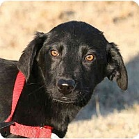 Adopt A Pet :: Sienna-ADOPTED! - kennebunkport, ME