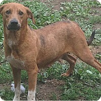 Adopt A Pet :: Keke - River Falls, WI