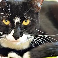 Adopt A Pet :: Tipper - Oviedo, FL