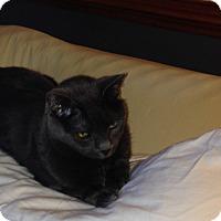Adopt A Pet :: Georgie - Richmond, VA