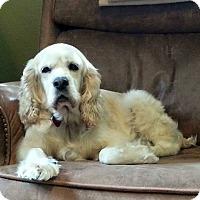 Adopt A Pet :: Darla - Santa Barbara, CA