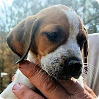 Adopt A Pet :: Dyson - Atlanta, GA