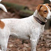 Adopt A Pet :: Roscoe - Albany, NY