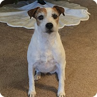Adopt A Pet :: Bailey In Houston PENDING - Houston, TX