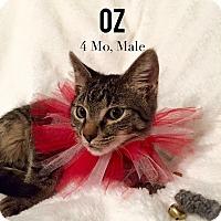 Adopt A Pet :: Oz - Bentonville, AR