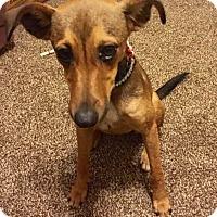 Adopt A Pet :: Tara - Natchitoches, LA