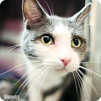 Adopt A Pet :: Raphael - Appleton, WI