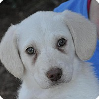 Adopt A Pet :: Kora - Atlanta, GA