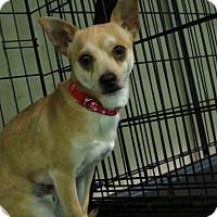 Adopt A Pet :: Sparky - Meridian, ID