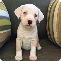 Adopt A Pet :: Elora Danan - Greensboro, GA
