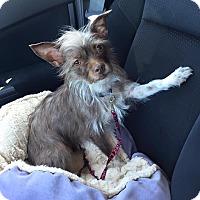 Adopt A Pet :: Taylor - Pitt Meadows, BC
