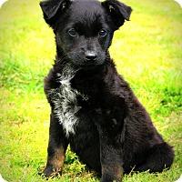 Adopt A Pet :: Froggy~ meet me! - Glastonbury, CT